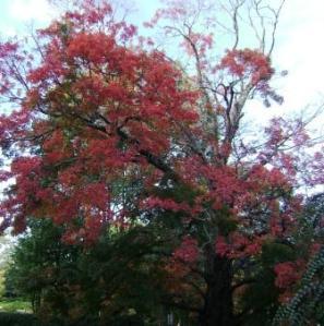ansley park fall tree
